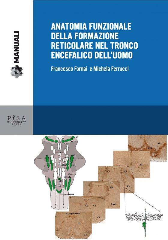 Anatomia funzionale della formazione reticolare nel tronco encefalico dell'uomo